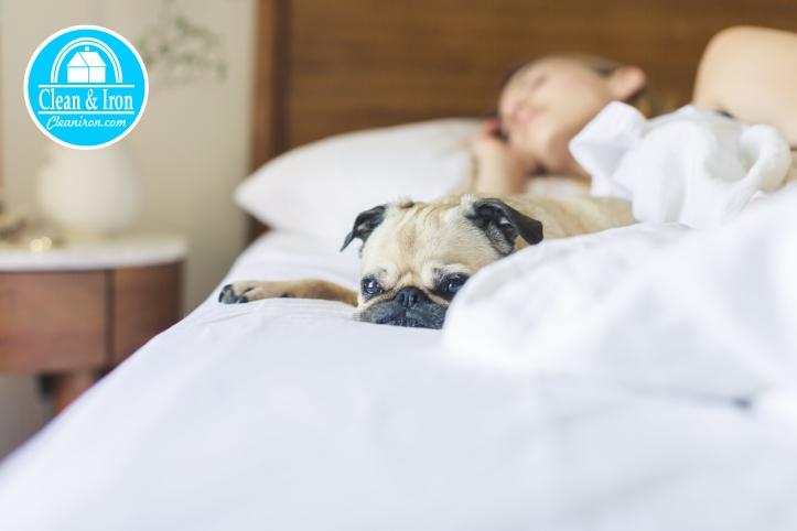 dormir y limpieza a domicilio